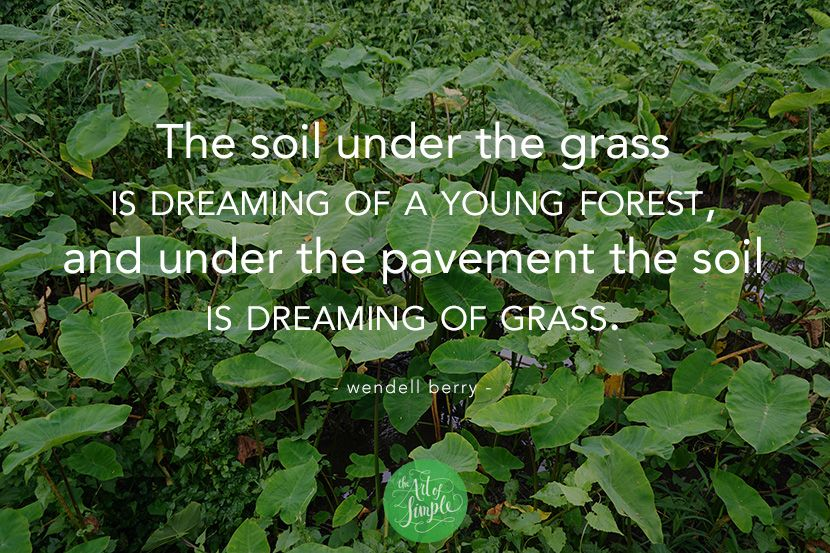 """""""The soil under the grass is dreaming of a young forest, and under the pavement the soil is dreaming of grass."""" -Wendell Berry"""